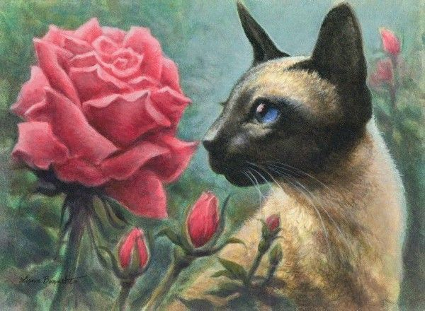 CHATS-LB-SIAMESE&RED ROSE