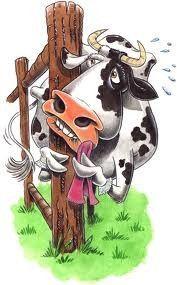 Humour dessins vaches page 6 - Vache dessin humour ...