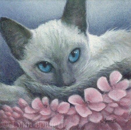 CHATS-LB-SIAMESE&BLUE