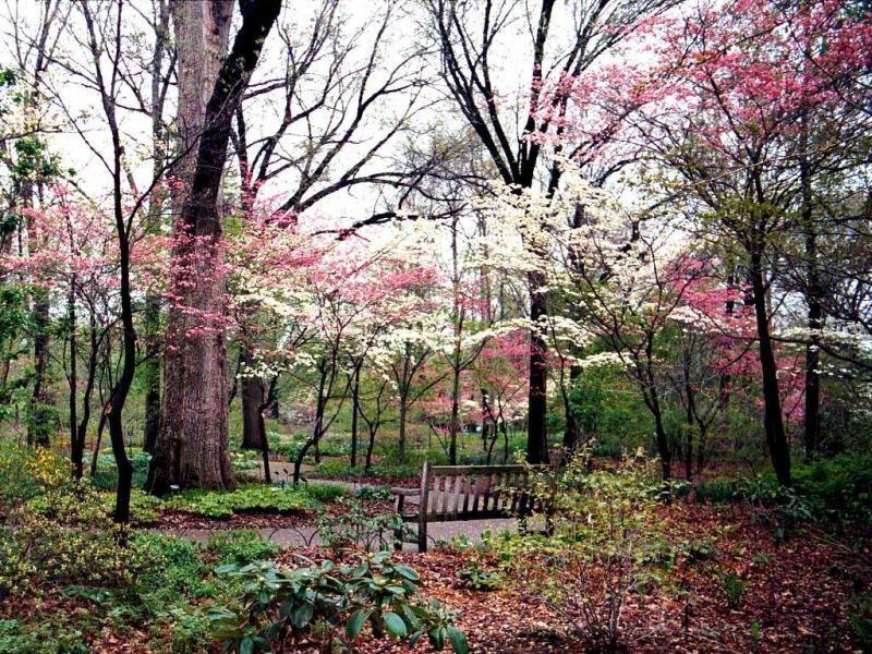 scenery spring pictures photos de paysages de printemps. Black Bedroom Furniture Sets. Home Design Ideas
