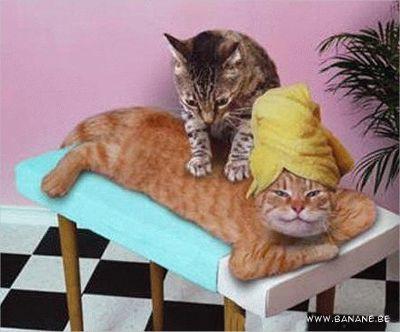 Nett chat male escort massage