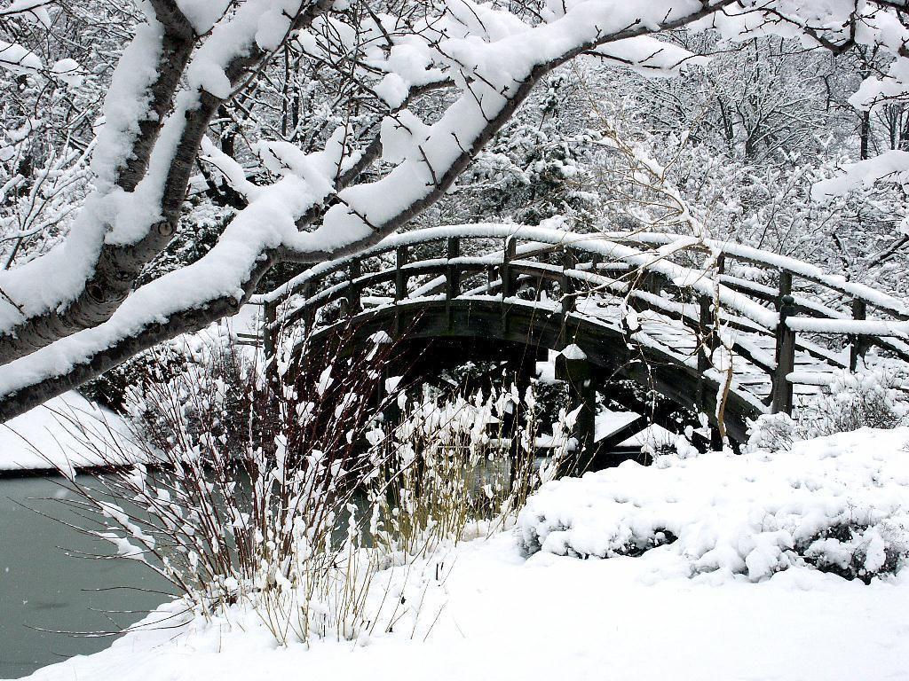 Jardin japonais 3 hiver for Jardin anglais en hiver